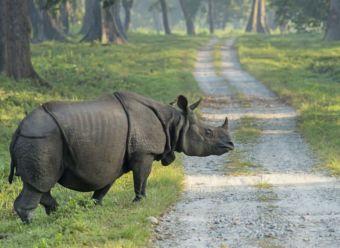 1280 520803530 Indian Rhinoceros