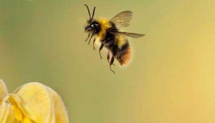 kepakan sayap lebah