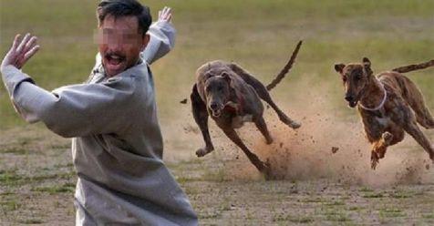 Anjing Min
