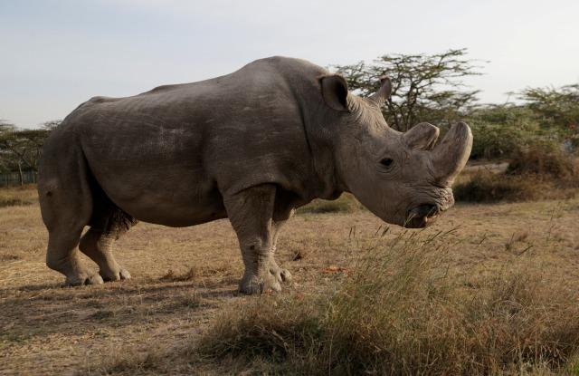 Cula Badak Dan Gading Gajah