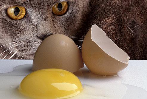 8 Minuman Dan Makanan Ini Sangat Berbahaya Untuk Kucing