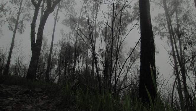 Ilustrasi hutan di Gunung | Hipwee