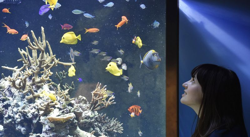 New Exhibition, 'Coral Reefs: Secret Cities Of The Sea' Opens At Natural History Museum In London