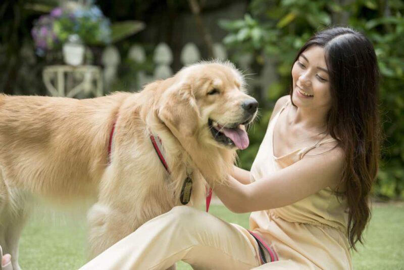 Benarkah Ada Kesamaan Di Dalam Pencernaan Anjing Dan Manusia