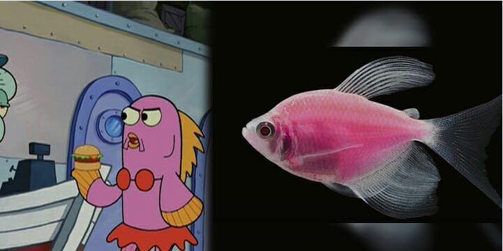 Evelyn Spongebob
