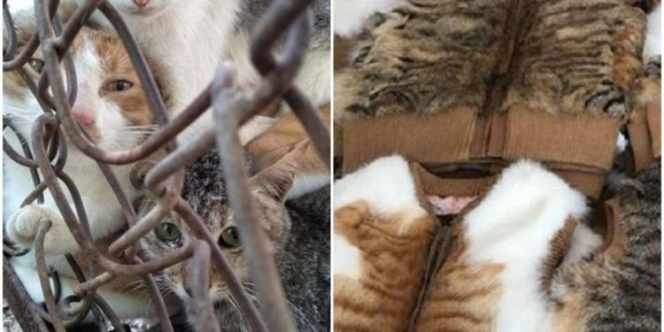 Sumber foto: Tempo   Facebook Anti-fur Society