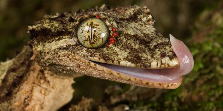 Hewan-Hewan Ini Memiliki Mata Yang Sangat Menakjubkan