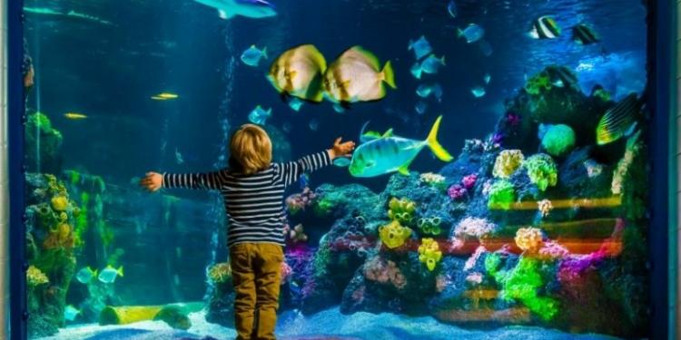 Keuntungan Memelihara Ikan Di Dalam Rumah