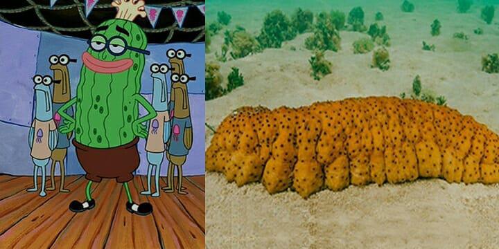 Kevin Si Ketimun Laut