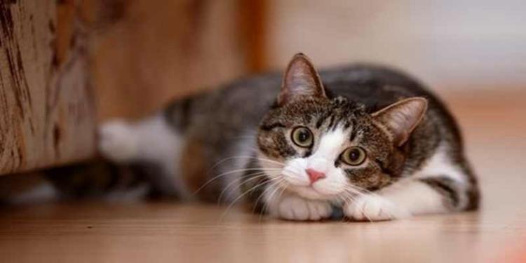 Mengenali Ciri Kucing Sehat 1