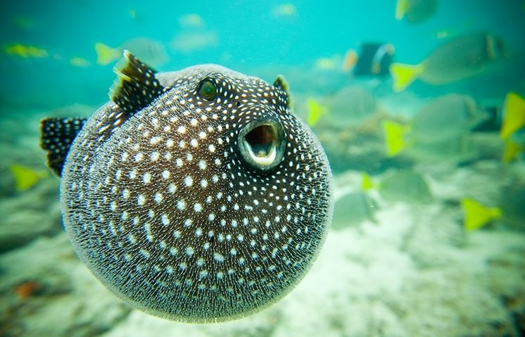 Putter Fish
