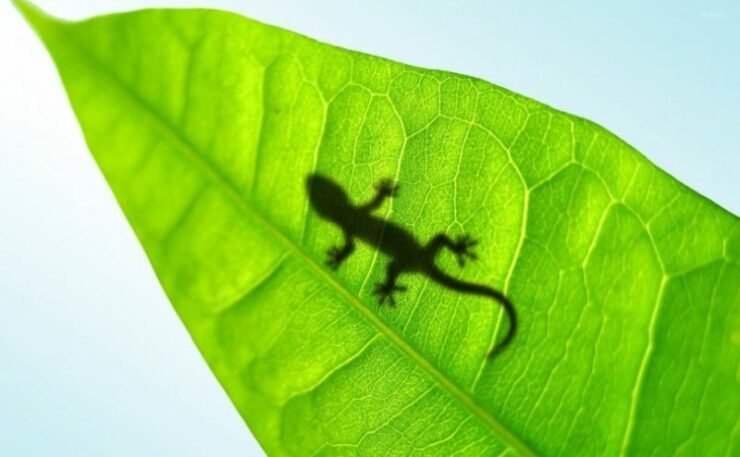 Lizard Silhouette Through A Leaf 33190 810x500
