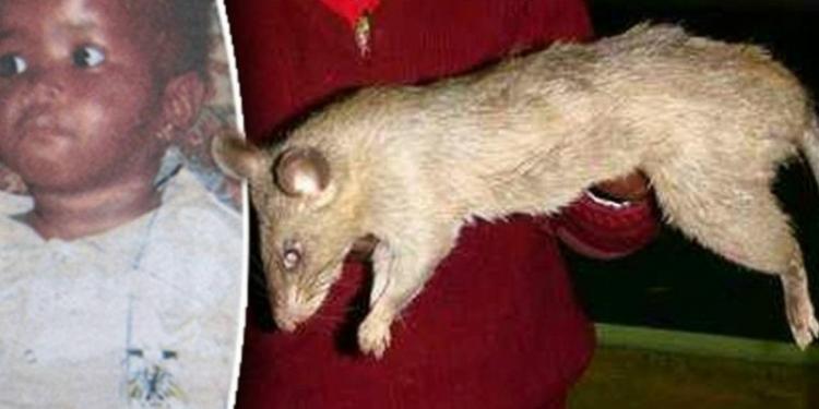 Bayi Tewas Dimakan Tikus Raksaksa Saat Sang Ibu Pergi Berpesta
