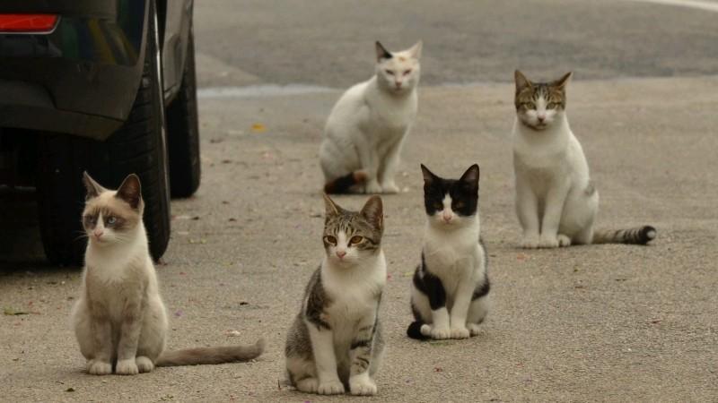 Sebenarnya Kucing Kampung Itu Jenis Kucing Apa Sih Bebaspedia Com