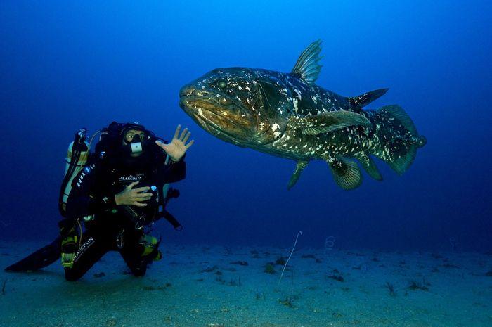 21993 Coelacanth Ikan Purba Sang Penguasa Laut