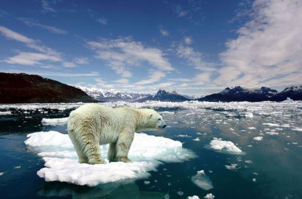 Apa Yang Akan Terjadi Jika Es Di Kutub Utara Dan Selatan Mencair?