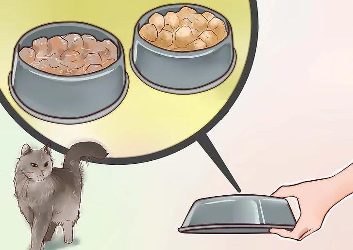 Dekati Dan Berilah Kucing Makanan 1