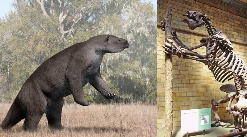 Giant Sloths 800x445 1