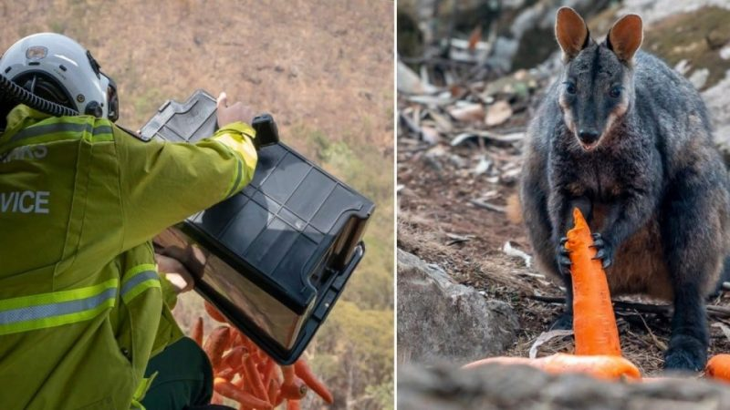 Australia Drops Food For Wildfire Animals Featured 1280x720 1