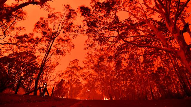 Kebakaran Hutan Australia