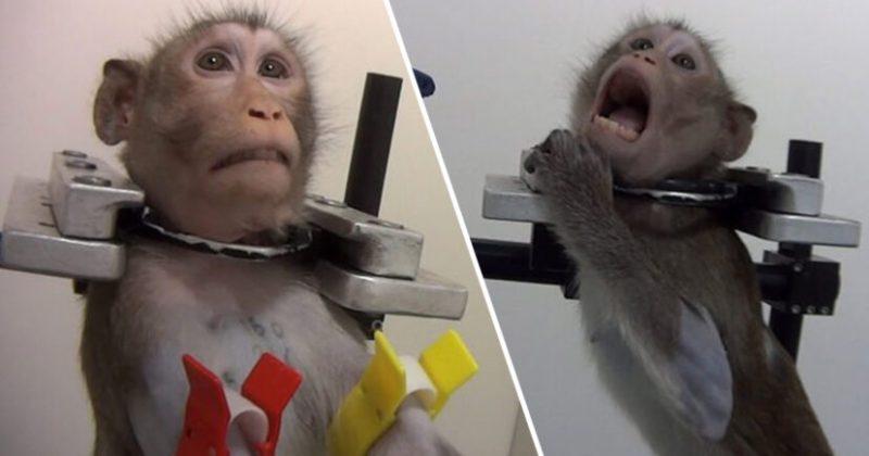 Tes Ujicoba Monyet Unilad