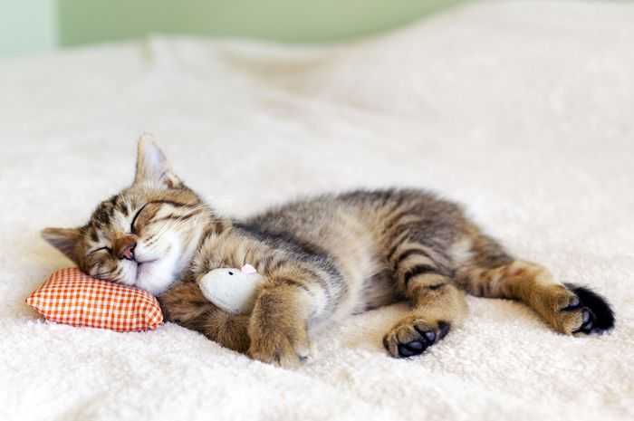 Tidurr