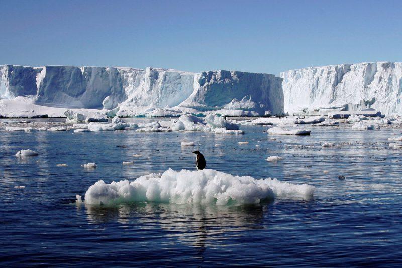 Suhu Antartika Meninggi, Dunia Akan Terancam