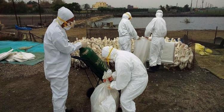Virus Corona Mengganas, Muncul Flu Burung di China