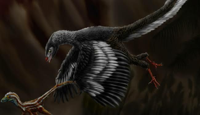 Dino Burung