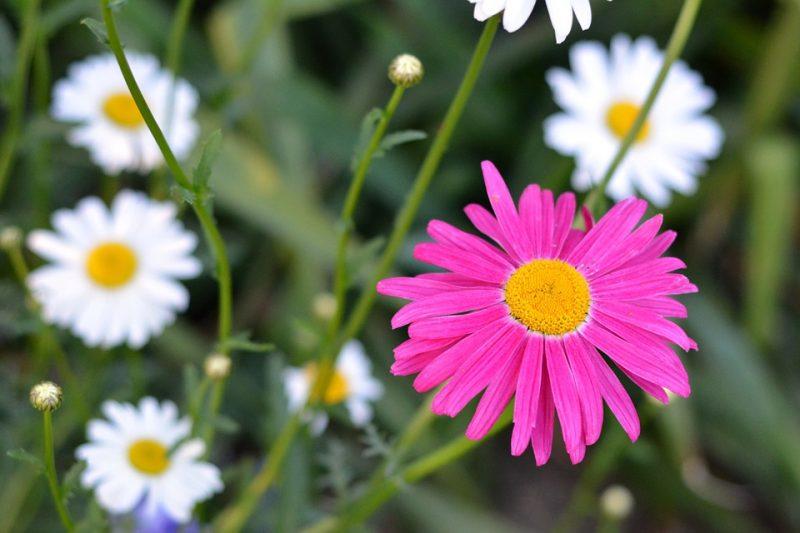 Flower 798959 960 720