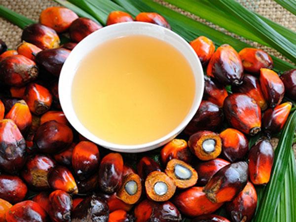 Minyak Inti Sawit Palm Kernel Oil 1553