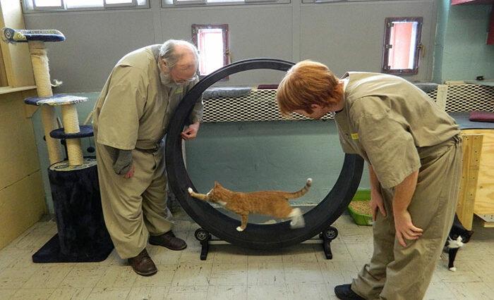 Penjara unik, Metode Mengubah Karakter Narapidana Dengan Merawat Kucing