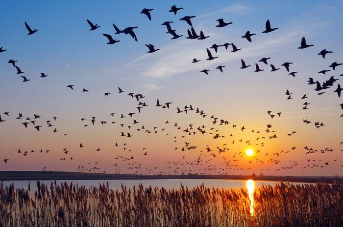 Burung Tidak Bertabrakan
