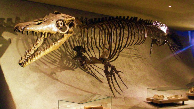 Mosasaurus Lebih Besar Dari T Rex Kenali 4 Fakta Mosasaurus 2