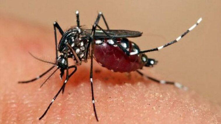 Kenali Perbedaan DBD dan Malaria