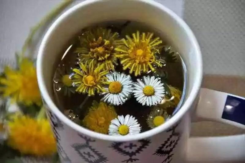 Dandelion Tea1