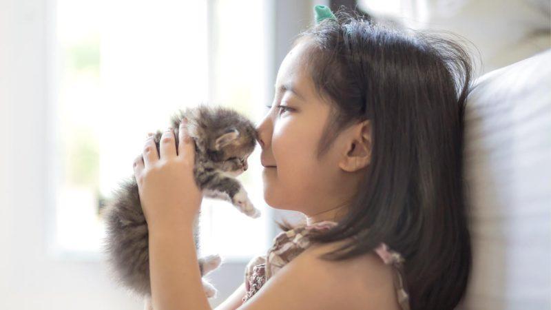 Ajak Anak Kucing Bermain