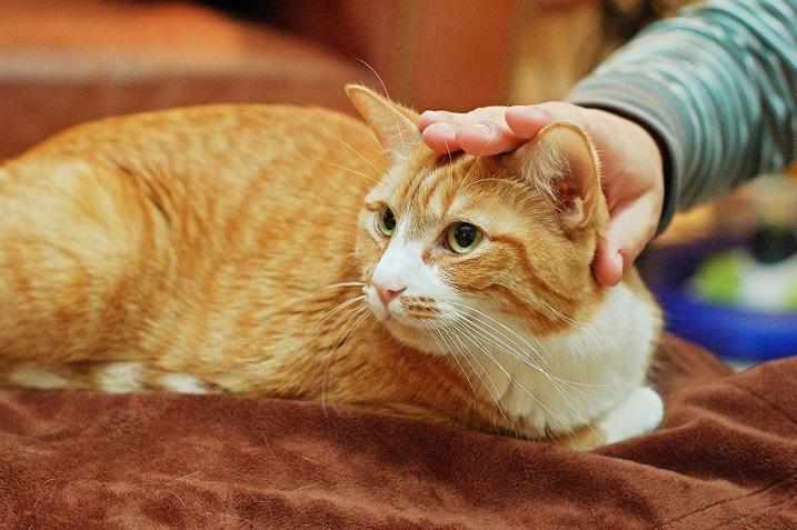 Bagian Tubuh Kucing Yang Tidak Boleh Disentuh