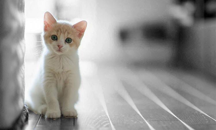 Kucing Mendengkur