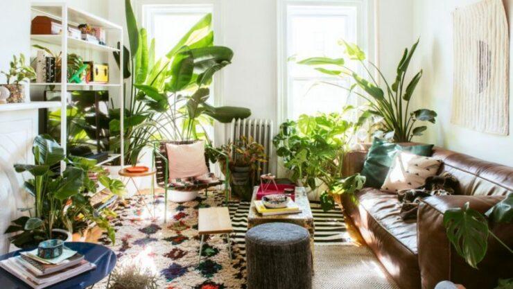 Manfaat Tanaman Dalam Ruangan Di Rumah