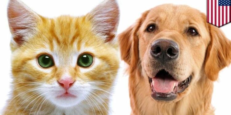 Mengapa Kucing Dan Anjing Jadi Hewan Peliharaan