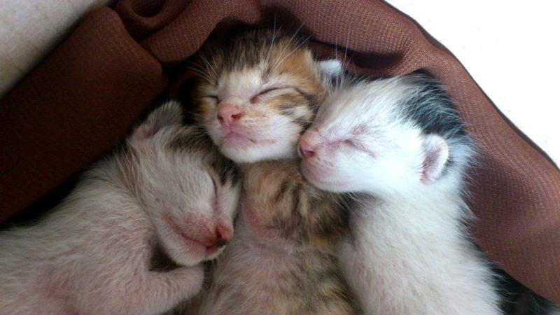 Mengapa Mata Anak Kucing Tertutup