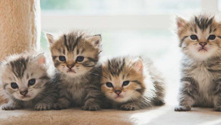 Merawat Anak Kucing Yang Tanpa Induknya