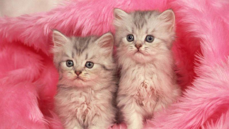 Pakai Kain Lembut Untuk Tempat Tidur Anak Kucing