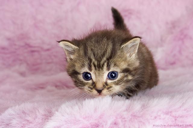 Pastikan Tubuh Anak Kucing Tetap Hangat