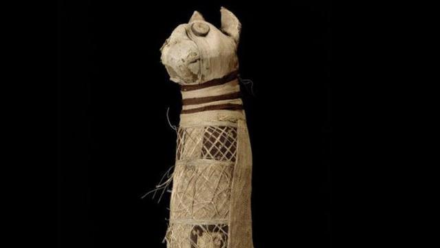 Ilustrasi Mumi Anak Kucing