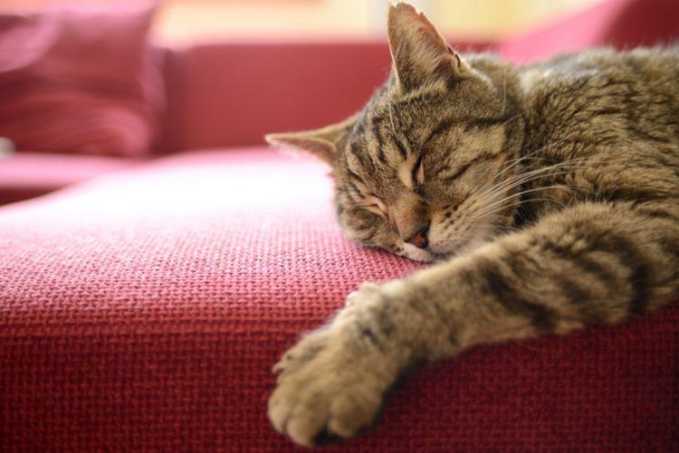 Kucing Merasa Bosan