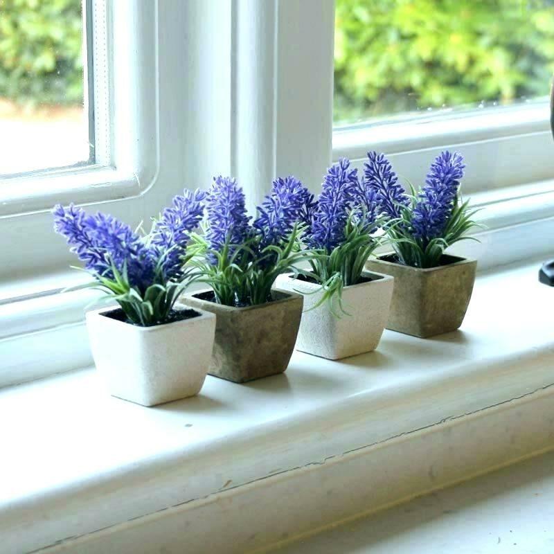 Cara Tanam Lavender