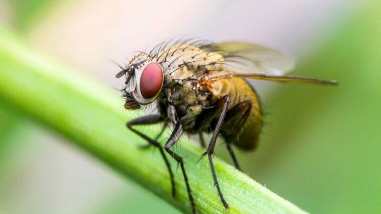 Alasan Kenapa Lalat Sulit Untuk Ditangkap