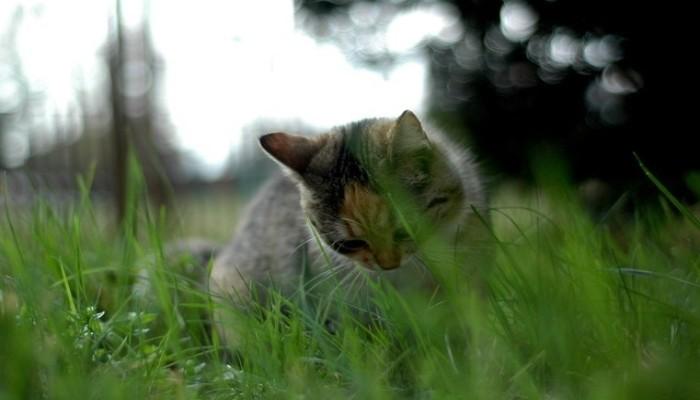 Alasan Kucing Suka Makan Rumput
